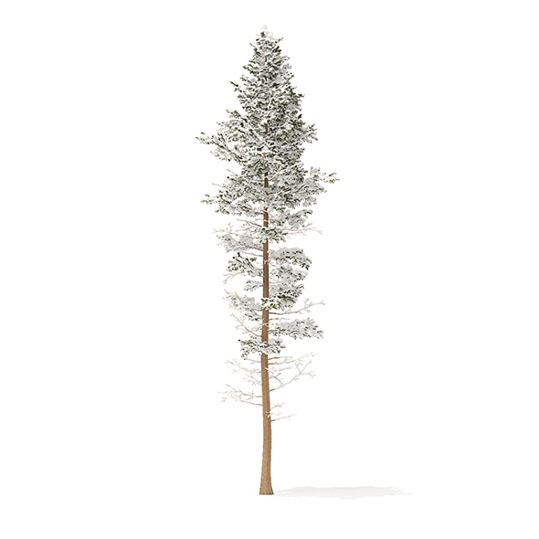 Pine Tree with Snow 3D Model 25m - 3DOcean Item for Sale