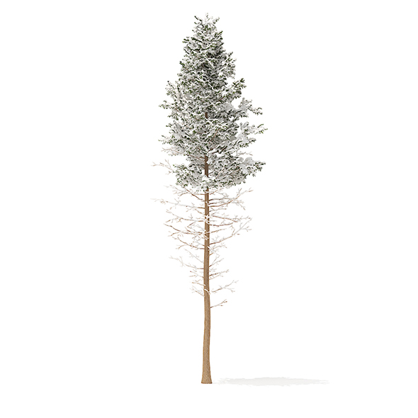 Pine Tree with Snow 3D Model 28.5m - 3DOcean Item for Sale