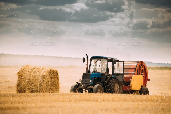 Tractor Collects Dry Grass In Straw Bales In Summer Wheat Field. - Stock Photo - Images