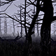 Dark Forest - VideoHive Item for Sale