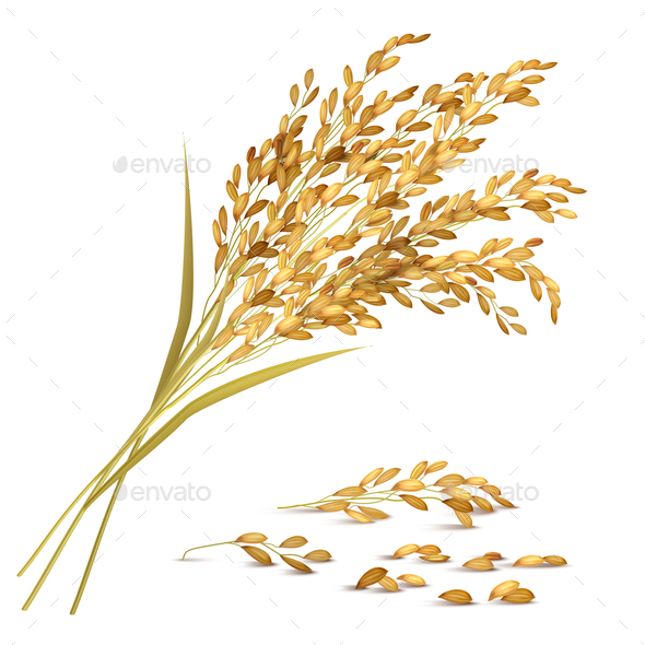 Rice Grain Illustration - Food Objects