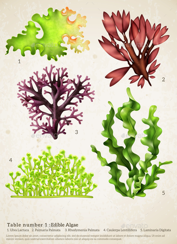 Sea Weed Realistic Collection - Flowers & Plants Nature