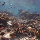 Beautiful Coral Reef in Clear Water - VideoHive Item for Sale