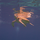 Sea Turtle Surface to Breathe - VideoHive Item for Sale