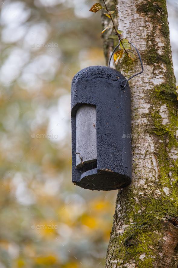 Ecological Gardening Batbox - Stock Photo - Images