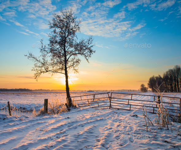 Lonely Tree in Winter Landscape - Stock Photo - Images