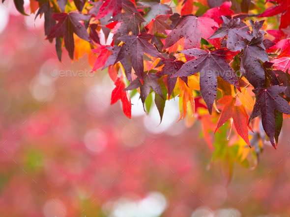 Fall Concept - Stock Photo - Images