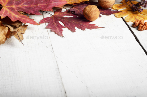 High angle shot of dry maple and oak leaves with nuts on white w - Stock Photo - Images