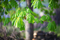 leaves of the chestnut forest backdrop - PhotoDune Item for Sale