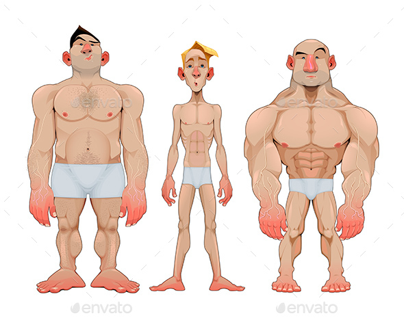 Three Types of Caricatural Male Anatomies - People Characters