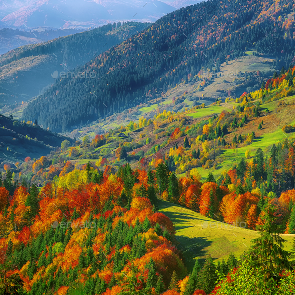 the mountain autumn landscape with colorful forest - Stock Photo - Images