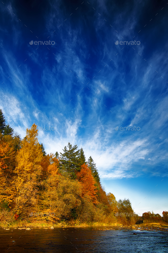 autumn forest by the river - Stock Photo - Images