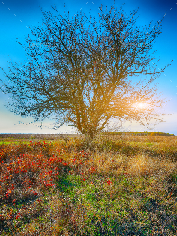 Autumn landscape with tree in the field - Stock Photo - Images