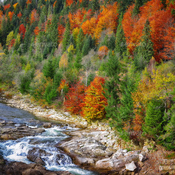 Autumn creek woods with colorfull trees foliage and rocks in for - Stock Photo - Images