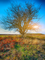 Autumn landscape with tree in the field - PhotoDune Item for Sale