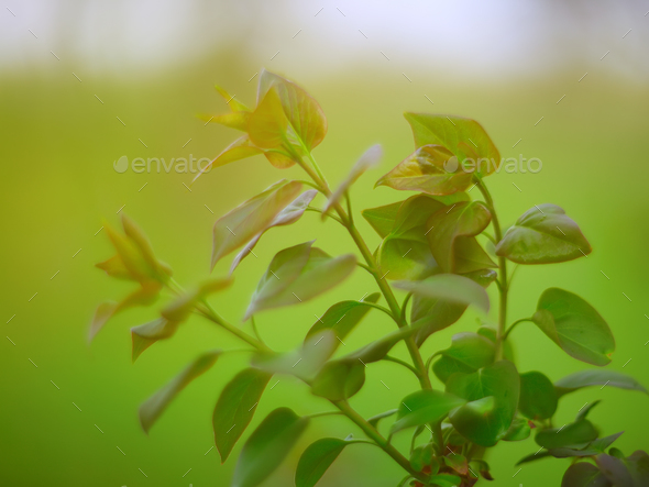 Beautiful green leaves - Stock Photo - Images