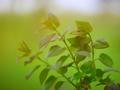 Beautiful green leaves - PhotoDune Item for Sale