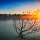 Lonely tree growing in a pond at sunrise - PhotoDune Item for Sale