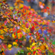 colored leaves on a bush - PhotoDune Item for Sale