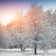 Winter forest at sunset with snow on trees and floor - PhotoDune Item for Sale