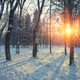 Beautiful winter sunset with trees in the snow. - PhotoDune Item for Sale