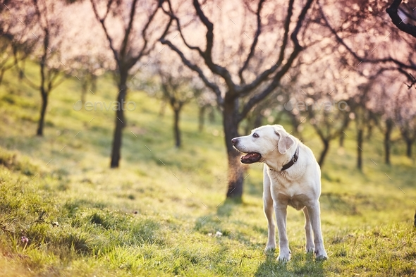 Dog in spring nature - Stock Photo - Images