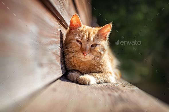 Kitten in the sun - Stock Photo - Images