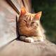 Kitten in the sun - PhotoDune Item for Sale