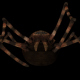 Spider Eat - VideoHive Item for Sale