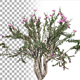 Crepe Myrtle Bush - VideoHive Item for Sale