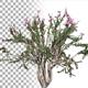 Crepe Myrtle Bush - VideoHive Item for Sale