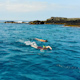 Snorkeling in the Ocean - VideoHive Item for Sale