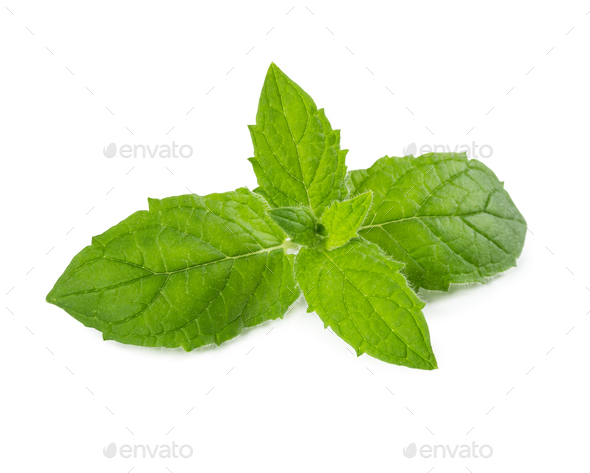 Fresh mint leaves isolated on white - Stock Photo - Images