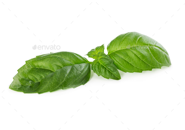 Fresh green basil isolated on white - Stock Photo - Images