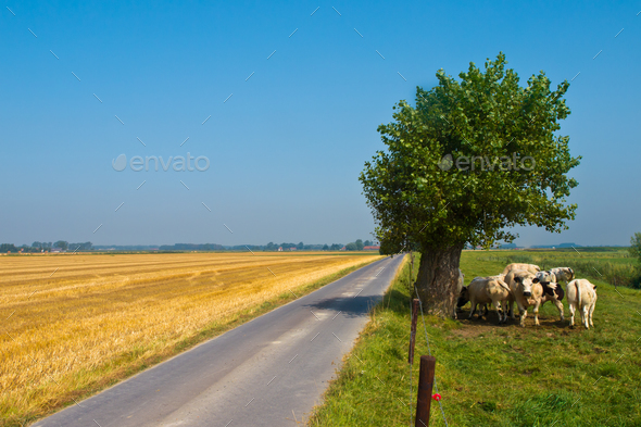 Straight Country Road - Stock Photo - Images