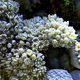 White Pulse Soft Coral - VideoHive Item for Sale