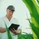 Serious Middle-aged Farmer Working on a Field of Corn. Uses a Digital Tablet, a Bottom View - VideoHive Item for Sale