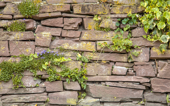 Old Cobblestone Wall Vegetation Background - Stock Photo - Images
