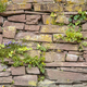 Old Cobblestone Wall Vegetation Background - PhotoDune Item for Sale