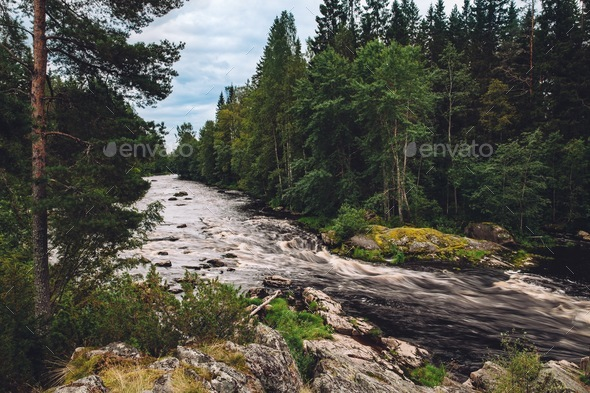 Mountain fast river stream of water in the rocks with green forest in Finland - Stock Photo - Images