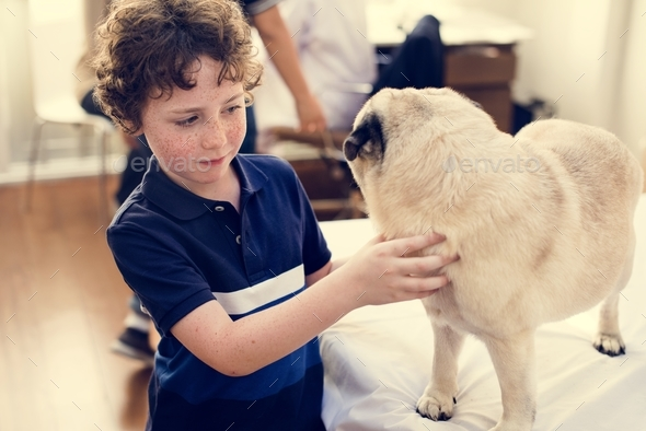 Little boy playing with a pug - Stock Photo - Images