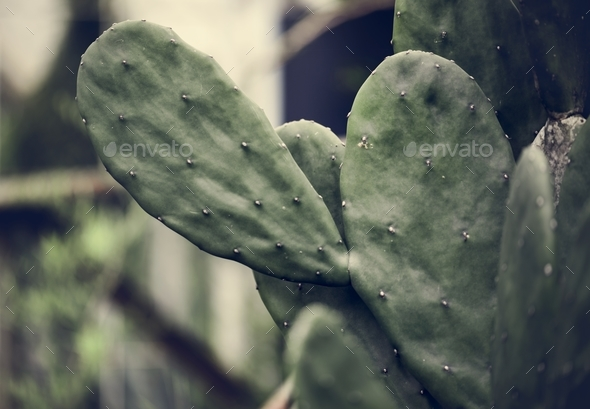 Close up image of a cactus - Stock Photo - Images