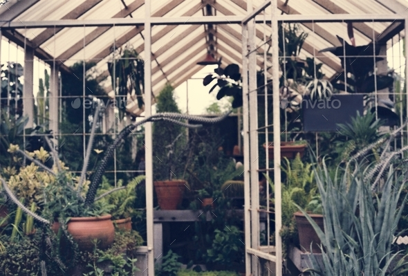 Greenhouse fulled with plants - Stock Photo - Images