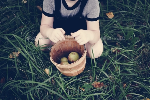 A young girl picking up some apples - Stock Photo - Images