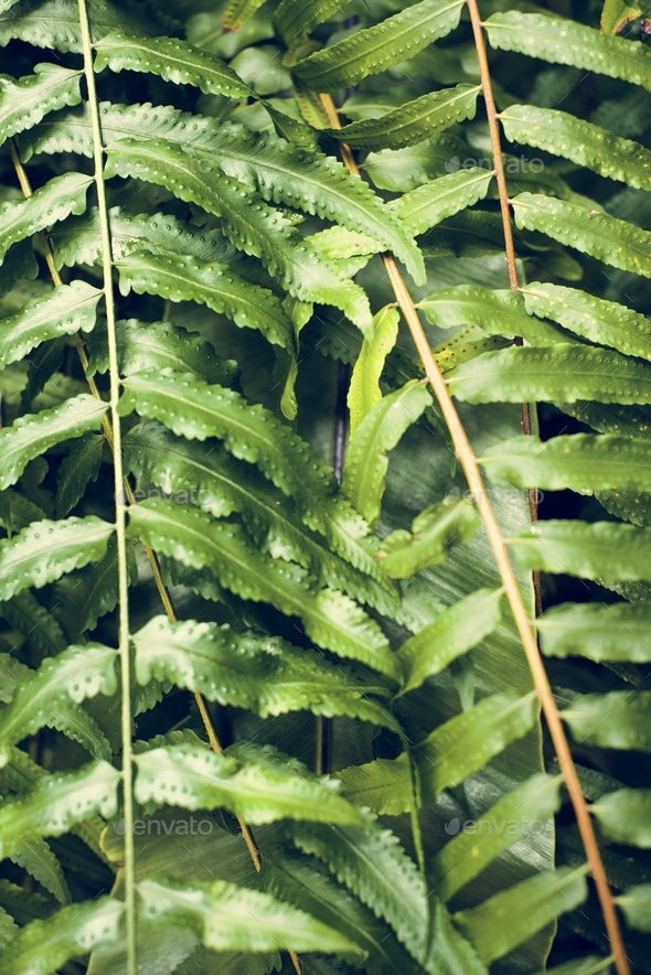 Close up image of tree leaves - Stock Photo - Images