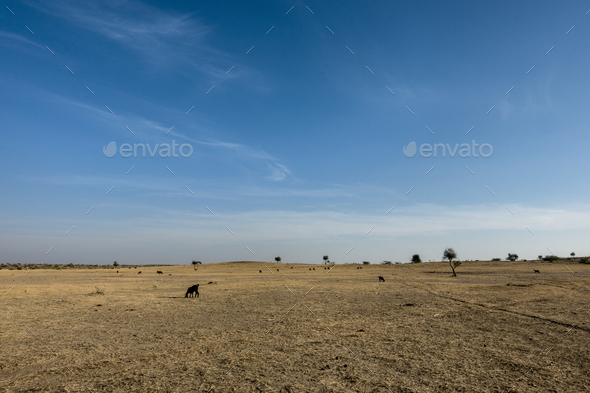 Thar Desert in Rajasthan India - Stock Photo - Images