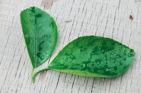 leaves lime on wooden - Stock Photo - Images
