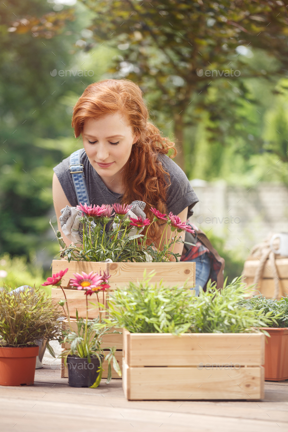 Woman planting pink flowers - Stock Photo - Images