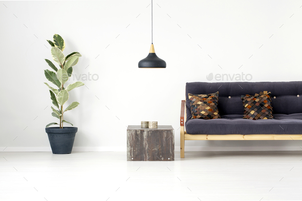 Ficus in living room - Stock Photo - Images
