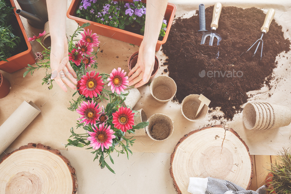 Top view of beautiful flowers - Stock Photo - Images